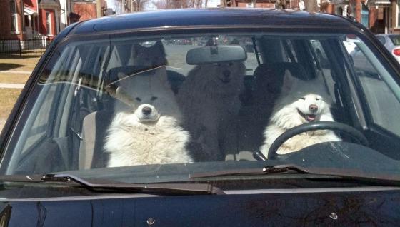 dog-roadtrip